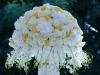 cvetia