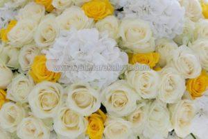 рози хортензии